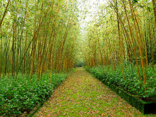 富士竹類植物園