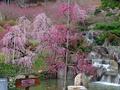 花の奥山高原