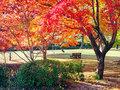 鳥羽山公園