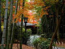 竹林の小径