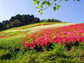 姫の沢公園